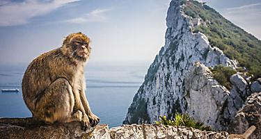 A monkey sitting on a ledge with the Rock of Gibraltar in the background