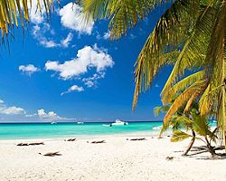 Palm trees hanging over white sanded beaches with crystal blue water in Grand Bahama Island, Bahamas