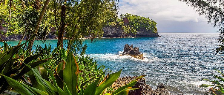 Rocky shore of a rain forest in Hilo, Hawaii