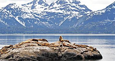 alaska inside passage sea lions glacier mountains