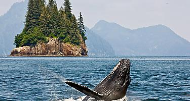 alaska inside passage whale watching mountain peaks ocean