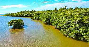 River with forest mangrove in Ishigaki, Japan