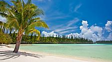 A palm tree on a beach in Isle of Pines, New Caledonia