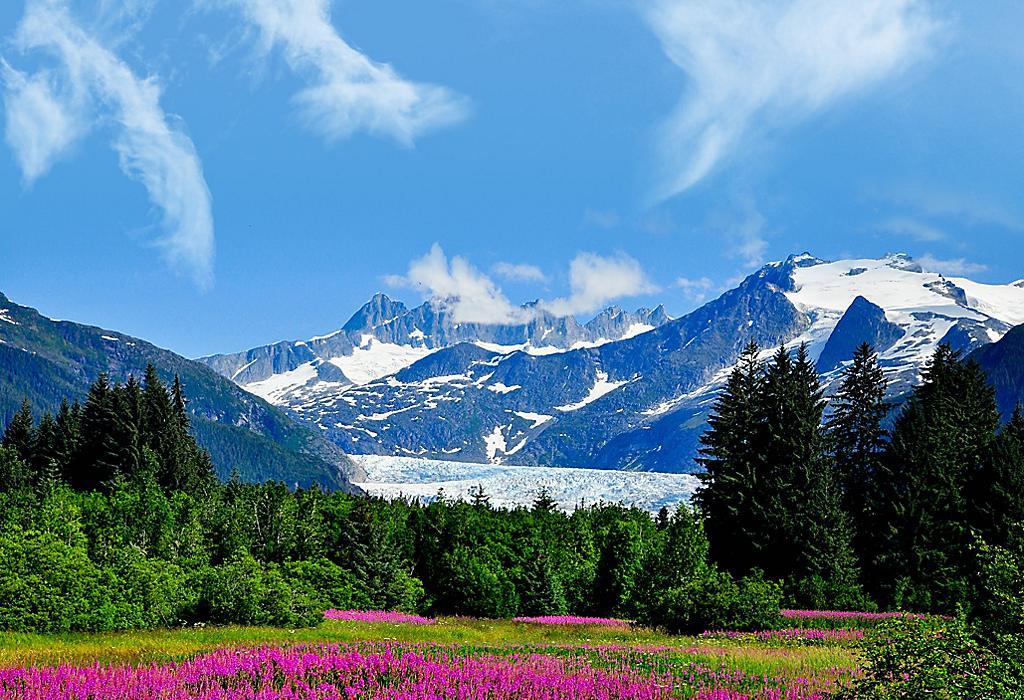 Aljaska - Page 2 Juneau-alaska-pink-flowers-nature-mountains-green-blue-skies