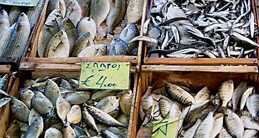 Various different kinds of fish for sale at a fish market