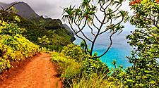 A beachside hiking trail with orange dirt through luscious green landscape