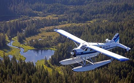 ketchikan alaska airplane nature trees bear adventure