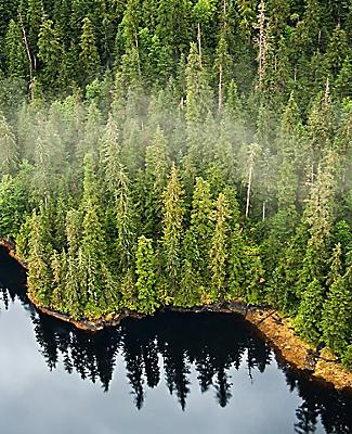 Where the pine trees meet the ocean in the national monument known as Misty Fjords