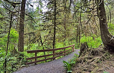Hiking through the Tongass Trail Forest in Ketchikan, Alaska
