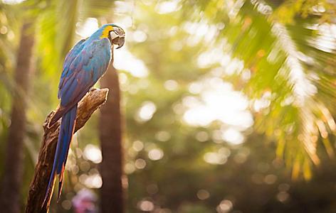 Garden Party Parrot Jungle, Key West