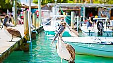 Pelicans hanging out on dock in Key West, FLorida