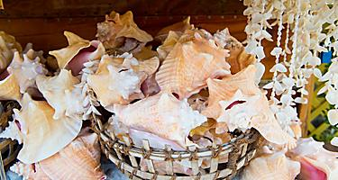 Souvenir shells at a shop in Key West