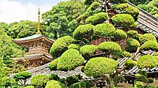 View of the Suma Temple in Kobe, Japan surrounded by lush trees