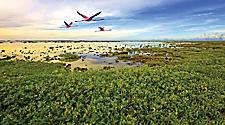 Flamingos flying over vegetation in Kralendijk, Bonaire