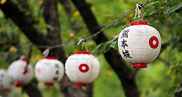 Japanese lanterns hung from tree to tree