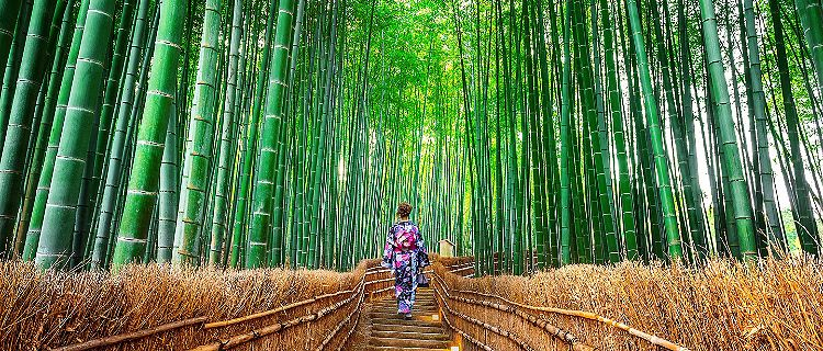 Bamboo forest path with woman in Japenese clothing walking down in Kyoto, Japan