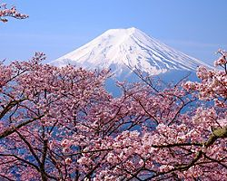 View of Mount Fuji with beautiful cherry blossoms in the Spring in Kyoto, Japan