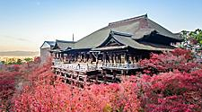 The Kiyomizu temple in Kyoto, Japan surrounded by pink flower trees