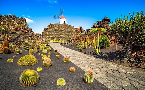 A tropical cactus garden in Lanzarote, Canary Islands