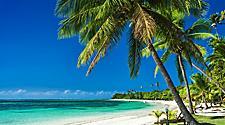 Palm trees on a beach in Fiji