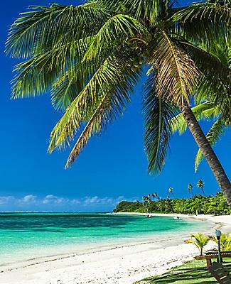 Palm trees on a beach in Fiji