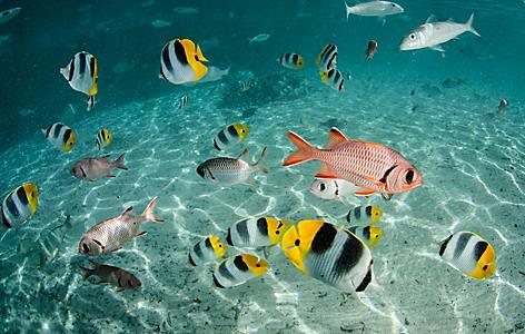 An assortment of reef fish in the ocean