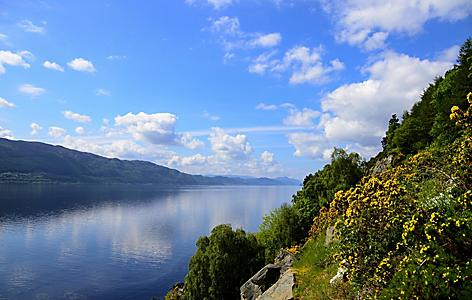 Yellow flowers blooming on the shore of Loch Ness in Scotland
