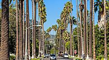 Tall palm trees on a street in Beverly Hills, California