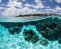 Clear blue water off the coast of Mare, New Caledonia