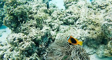Tropical fish and coral off the coast of Mare, New Caledonia