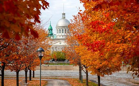 fall leaves season bonsecours market montreal canada