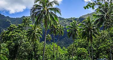 The jungle landscape in Moorea Island, French Polynesia