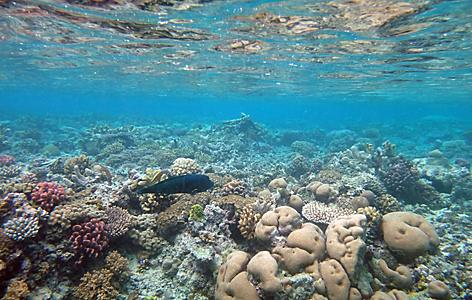 View of underwater sea life in Mystery Island, Vanuatu