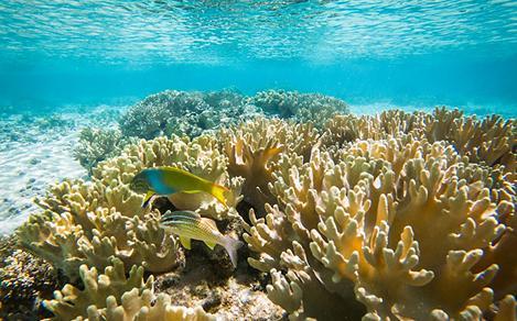 Mystery Island Underwater Coral Reef Snorkeling