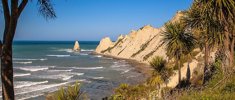Cape Kidnappers with cabbage trees (Cordyline australis) in front, Napier, New Zealand
