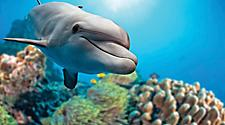 Closeup of a bottlenose dolphin swimming in Nassau, Bahamas