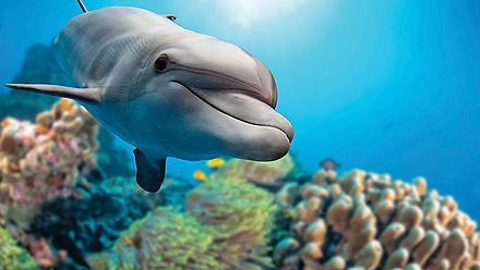 Closeup of a Dolphin Swimming, Nassau, Bahamas