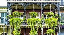 Plants hanging over ornate balcony in New Orleans