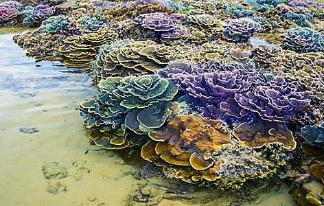 Colorful earth tone coral reefs in shallow water in Cam Ranh, Vietnam