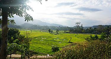 Rice fields and mountains in Cam Ranh, Vietnam