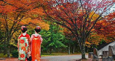 Two geisha girls walking on a road during Autumn in Niigata, Japan