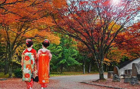 Two geisha girls walking on a road during Autumn in Niigata, Japan
