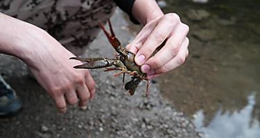 A man holding a crayfish