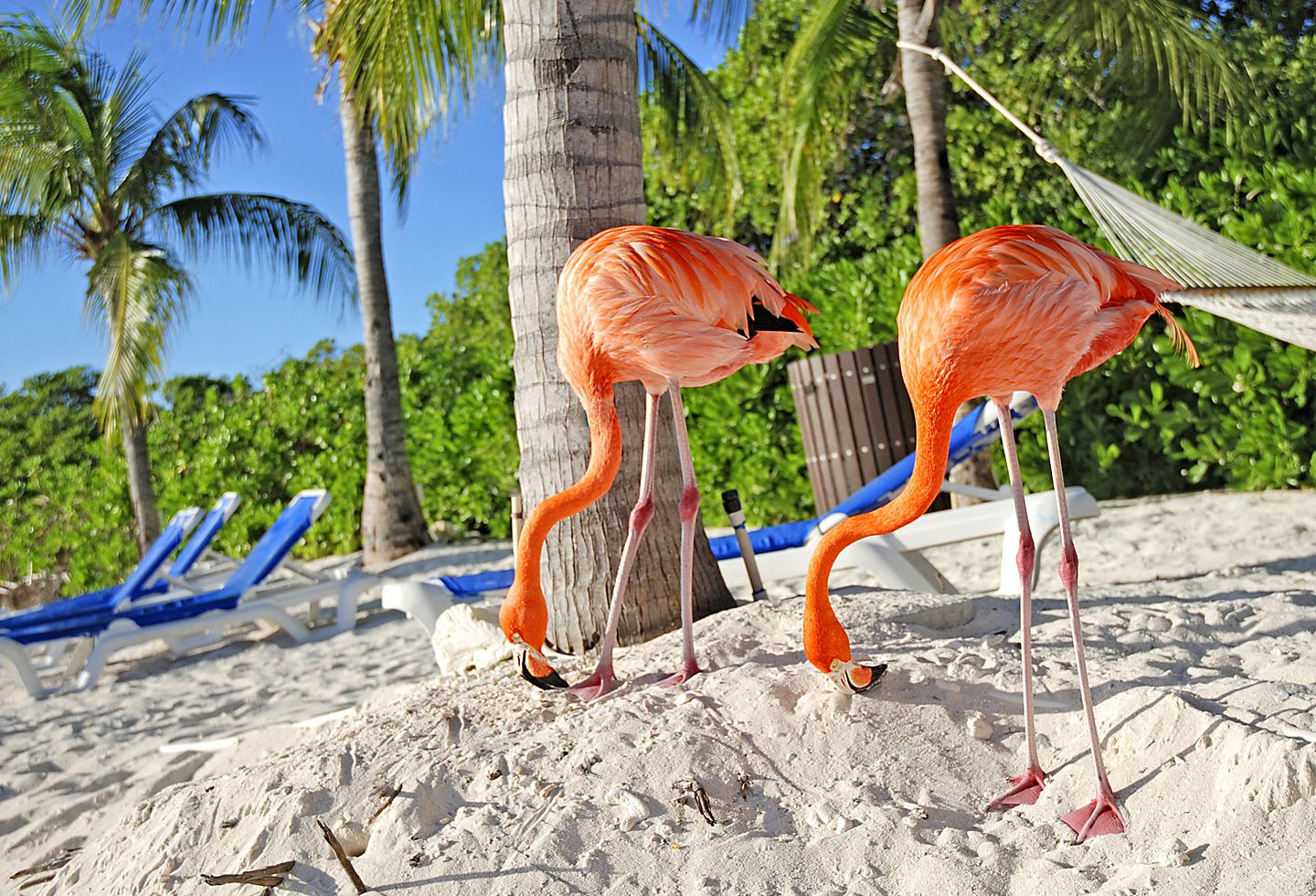 Aruba Beach Flamingo Hammock