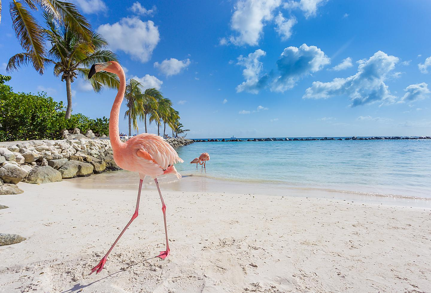 Aruba Flamingo Beach White Sand