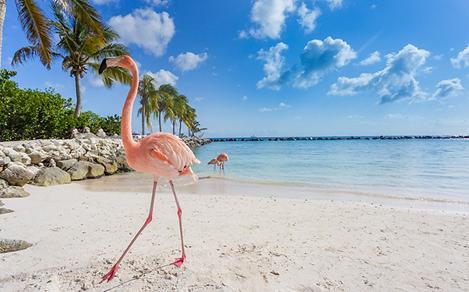 Aruba Flamingo Beach White Sand