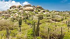 Rocky landscape with cactus, Arikok National Park, Oranjestad, Aruba