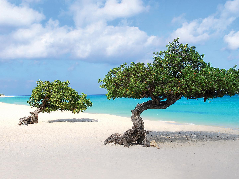 Oranjestad, Aruba, Divi divi trees caesalpina coriaria