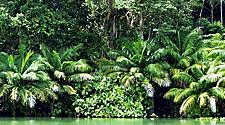 Jungle on the shoreline of a small island in Lake Gatun, in the Panama Canal, Panama
