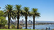 Palm trees in Kings Park